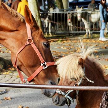 Lombricompostage pour Centres Equestre