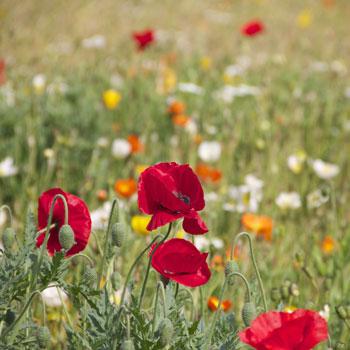 Lombricompostage pour Horticulteurs